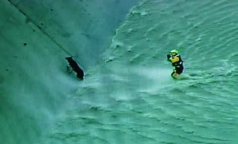 Rescate de perro en helicóptero