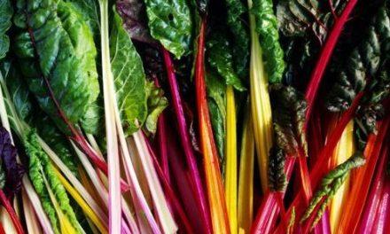 Seis vegetales para sentirte más sano y felix