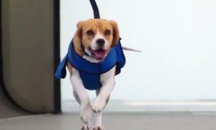 Sherlock – El perro que encuentra y devuelve los objetos perdidos de una aerolínea