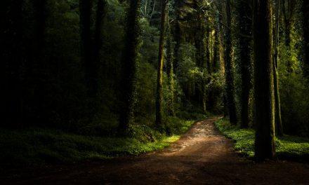 Disminuye el potencial negativo del efecto invernadero en Portugal