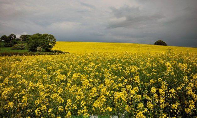 Proponen producir biodiésel con etanol y nuevos catalizadores