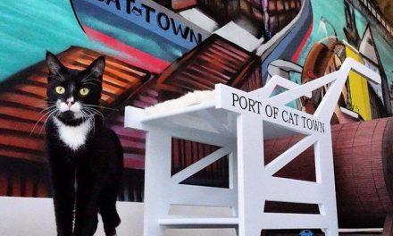 La primera cafetería con gatos de América