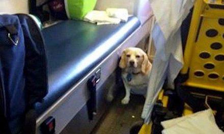 Un perro recorre más de 30 kilómetros agarrado al exterior de una ambulancia para poder estar junto a su dueño