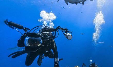 Sumérgete en el Gran Arrecife de Coral sin salir de tu casa