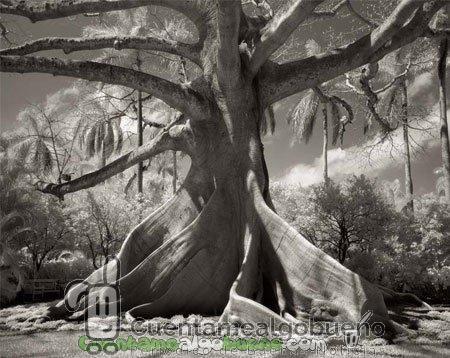 14 años fotografiando los árboles más antiguos de la tierra