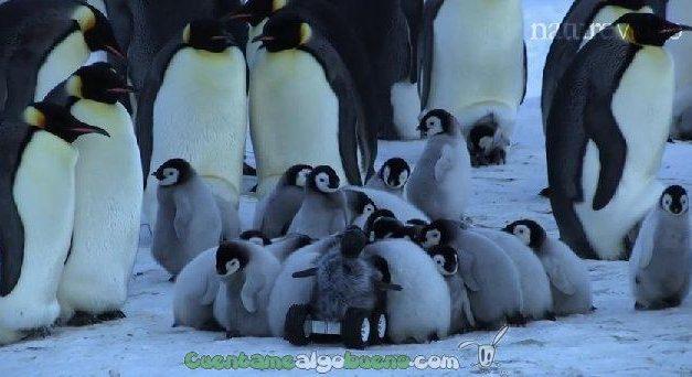 Top ten de los animales más adorables según la revista 'Nature'