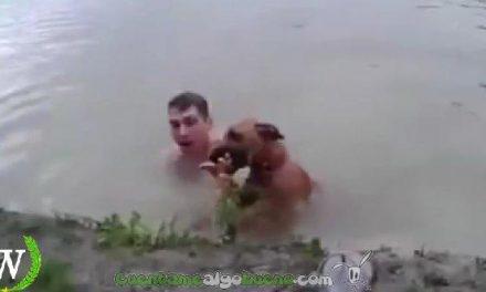 Un perro se lanza a rescatar a su dueño al creer que éste se ahogaba