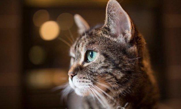 Cierran en Estados Unidos un laboratorio que experimentaba con gatos