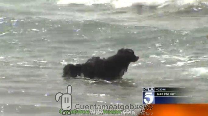 Un perro rescata a dos personas atrapadas por una fuerte corriente mientras surfeaban