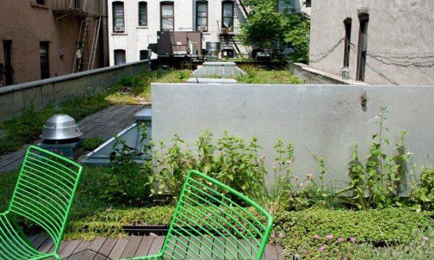Demuestran la mejor eficiencia energética de edificios con cubiertas vegetales