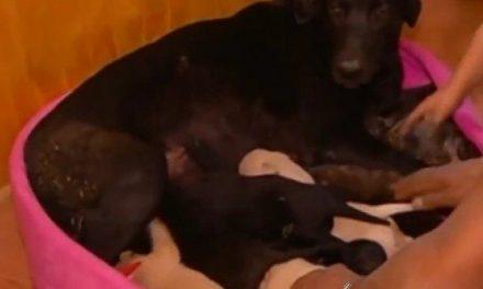 Una perra salva a sus nueve cachorros de ser quemados en un incendio al enterrarles bajo tierra