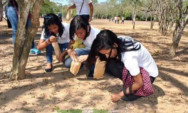 500 brigadas de niños recogen 30 toneladas de semillas para reforestación en Venezuela