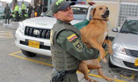 Policía salva en Colombia a un perro que lanzaron al agua con las patas amarradas