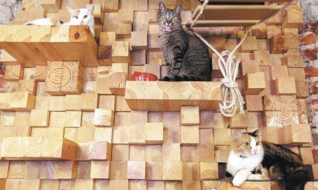 Inauguran en México el primer café para gatos de Iberoamérica