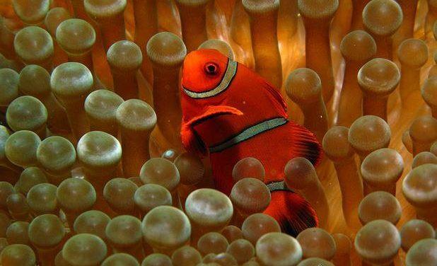 Inminente fin de vertidos en la Gran Barrera de Coral