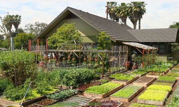 Una familia  produce 2.700 kg de comida al año en 370 m2… Mucho más de lo que necesita