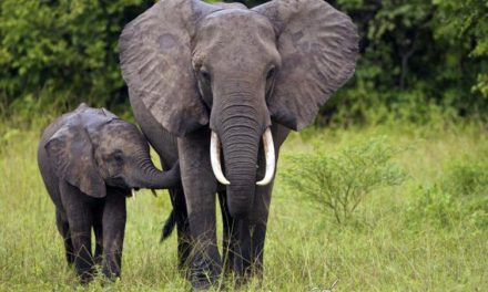 Naciones Unidas apuesta por la vida animal