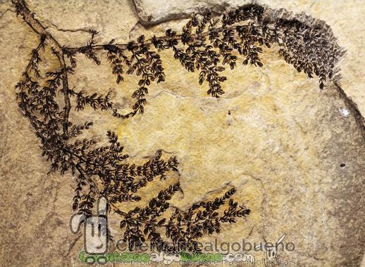 Una planta de millones de años