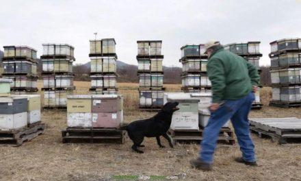 Guardianes de las abejas