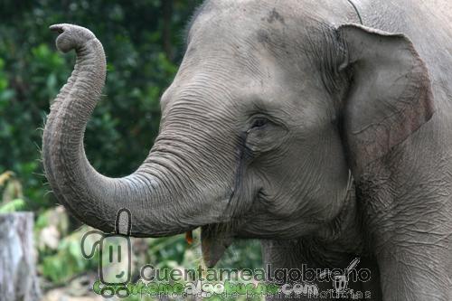 Protegiendo los bosques de Sumatra