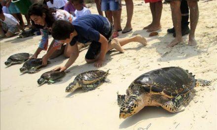 Tortugas en libertad