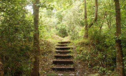 Los beneficios de pasear en la naturaleza