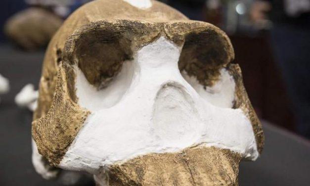 'Homo naledi', una nueva especie de homínido
