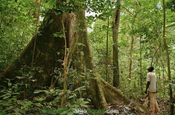 Un nuevo paso en la conservación del patrimonio forestal