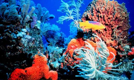 Por la conservación del entorno marino