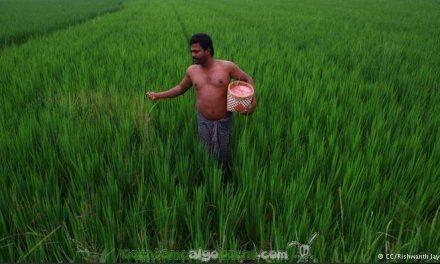 Récord mundial de cosechas en India sin usar transgénicos ni herbicidas