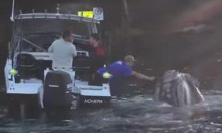 Noble gesto de ayuda hacia una ballena