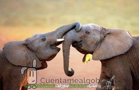 No más circos con animales salvajes en Holanda