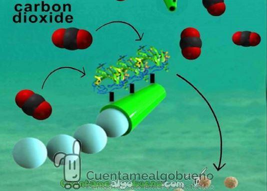 Desarrollan Micromotores para limpiar de Dióxido de Carbono el Mar