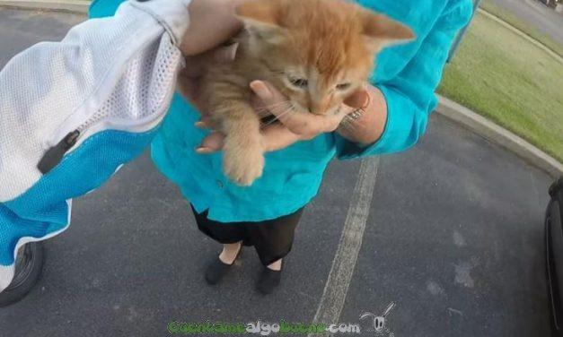 Motorista salva a un gatito