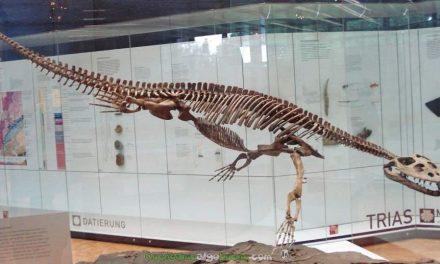 Simosaurus, un gran reptil marino que vivió en la Península Ibérica