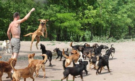 Un santuario para 450 perros abandonados