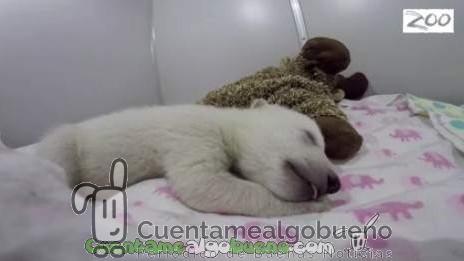 Los sueños de un oso polar