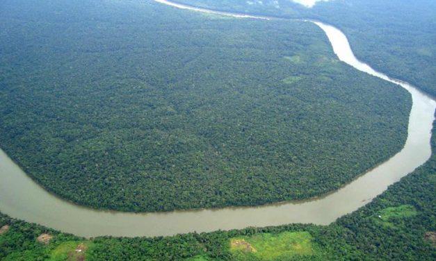 Centro Internacional para el Manejo de Bosques