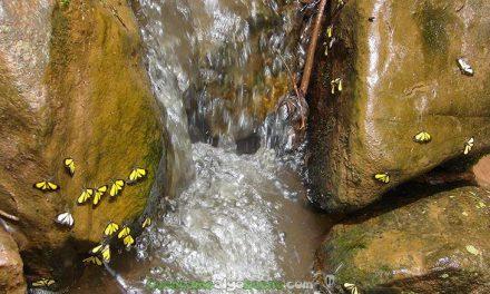 Demuestran que la biodiversidad fortalece los ecosistemas