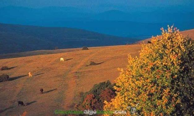 El Acebal de Garagüeta, el mayor bosque de acebos