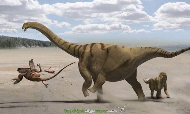 Nueva especie de dinosaurio: el gran Notocolossus