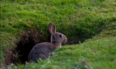 Ya es posible medir efectos de tóxicos en humanos sin ensayar con animales