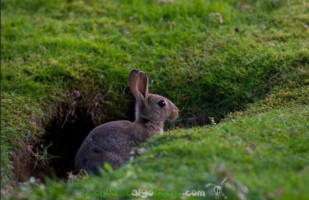Un conejo en el campo, donde deberían estar. Foto: webted.