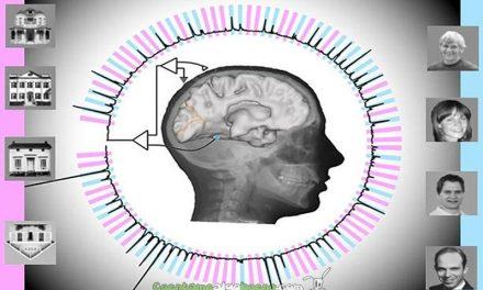 Consiguen que un ordenador reconozca las imágenes que ve el cerebro humano en tiempo real