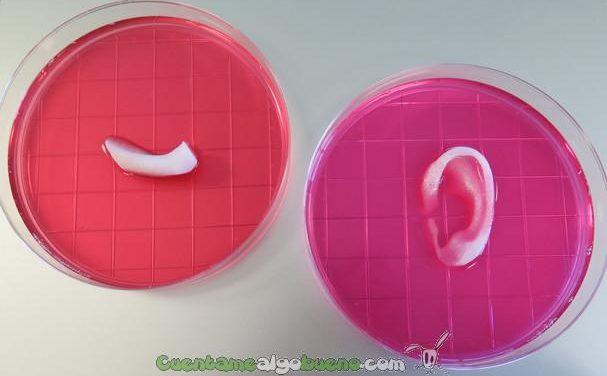Tejidos humanos mediante bioimpresión 3D