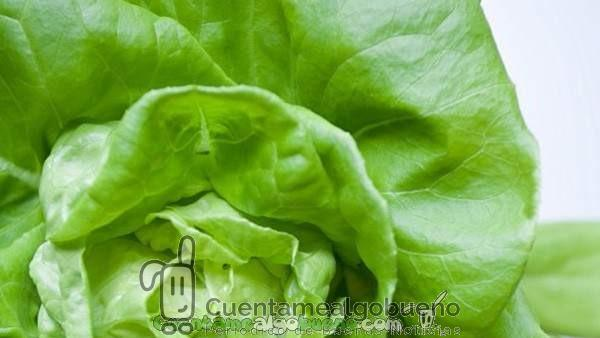 Los beneficios de las verduras de hoja verde