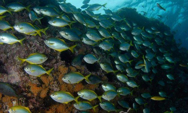 Nuevas especies marinas en Chile