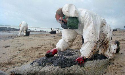 Recuperación ecológica de suelos contamidos
