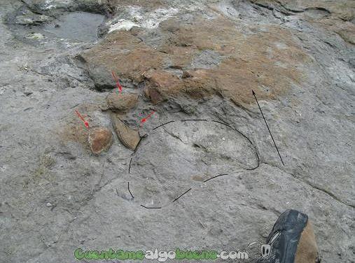 Almejas de agua dulce del Jurásico