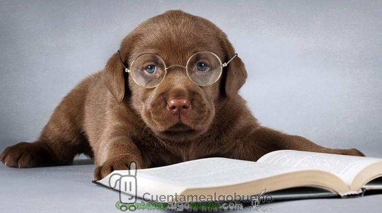 Consiguen medir el coeficiente intelectual de los perros